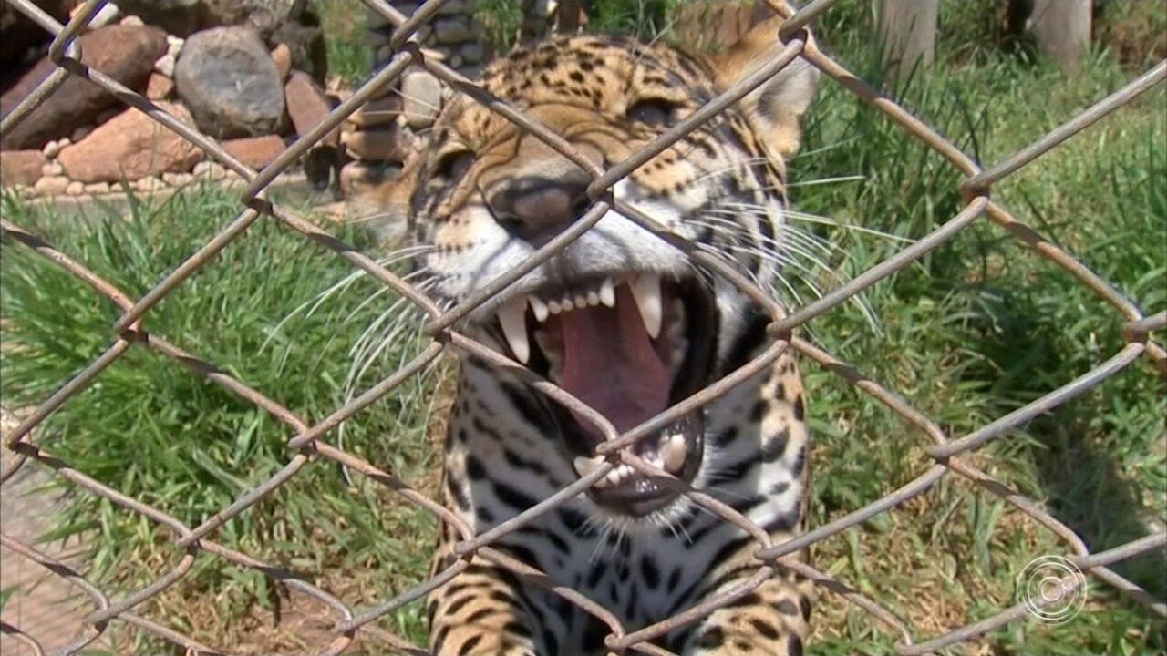 ONG Mata Ciliar pede ajuda financeira para manter trabalho com animais silvestres