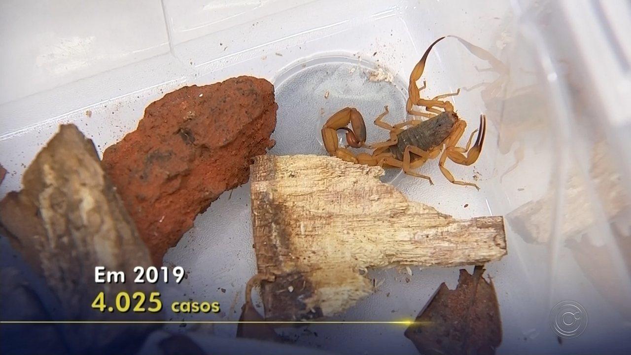 Infestação de escorpiões preocupa moradores e deixa especialistas em alerta na região