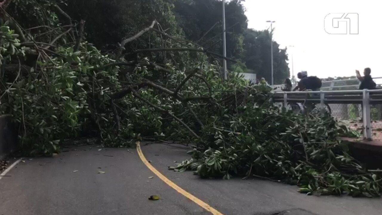 Árvore cai e interdita a Avenida Niemeyer