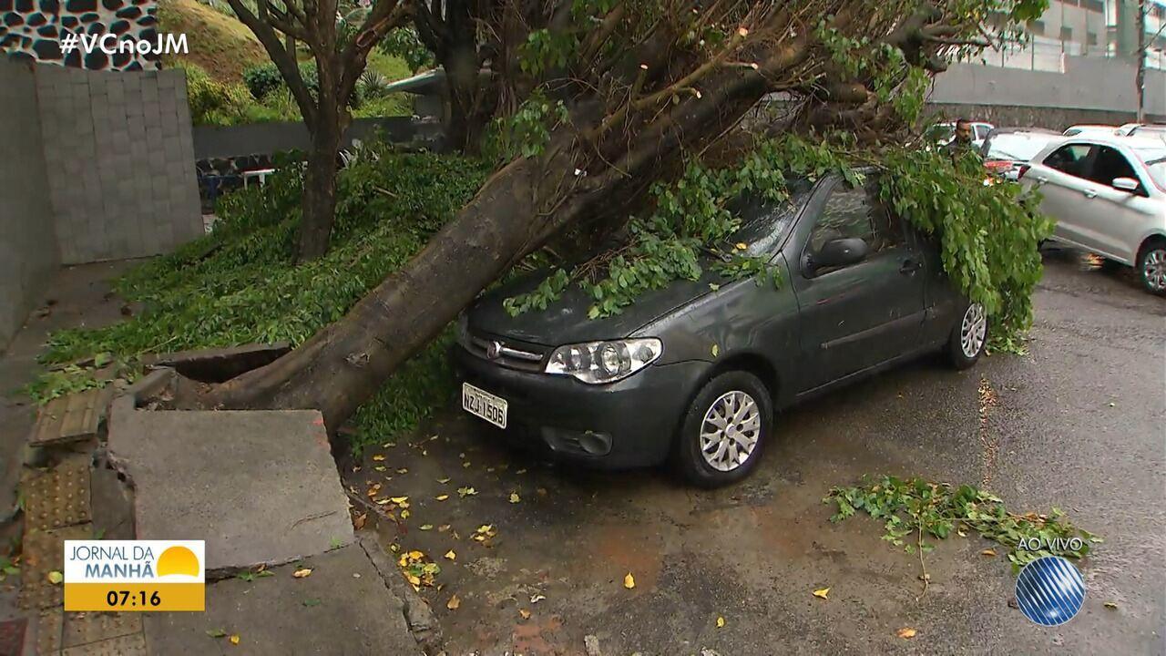 Reflexos da chuva: árvore cai em cima de carro na Pituba, em Salvador