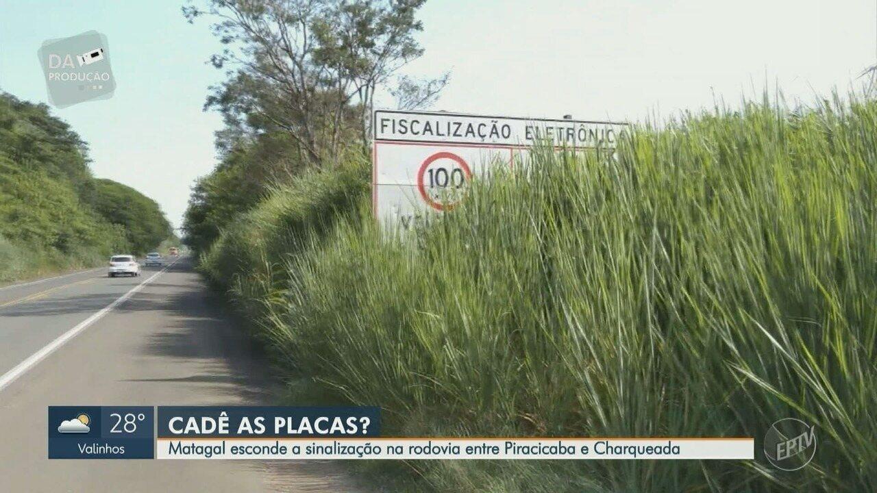 Motoristas reclamam de mato em frente de placas de sinalização na Rodovia Hermínio Petrin