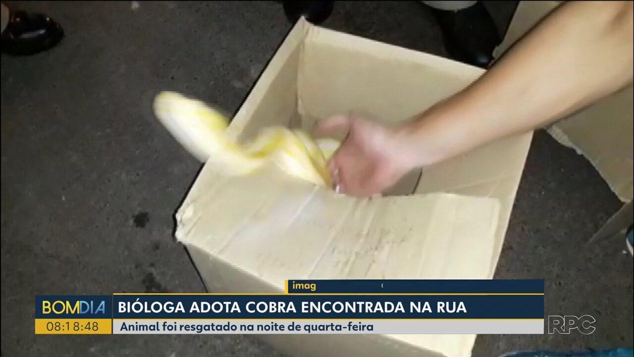 Bióloga adota cobra encontrada em Maringá