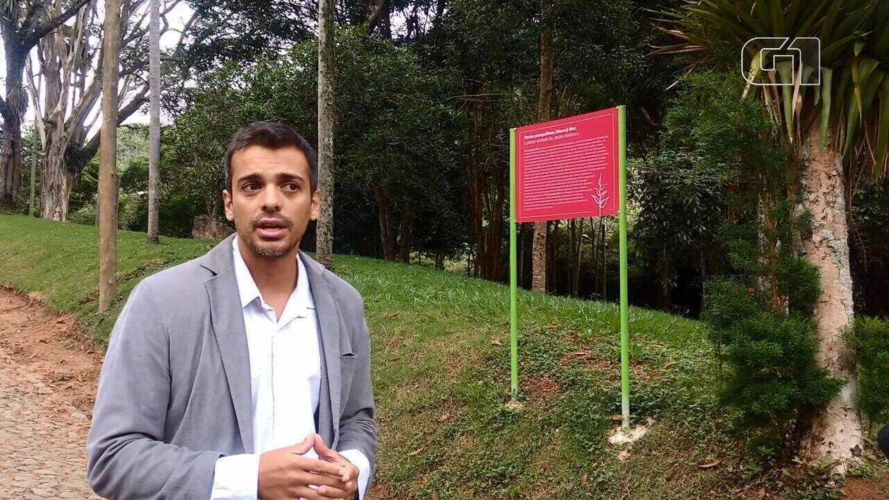 Vice-diretor fala sobre a bromélia que é a planta símbolo do Jardim Botânico da UFJF