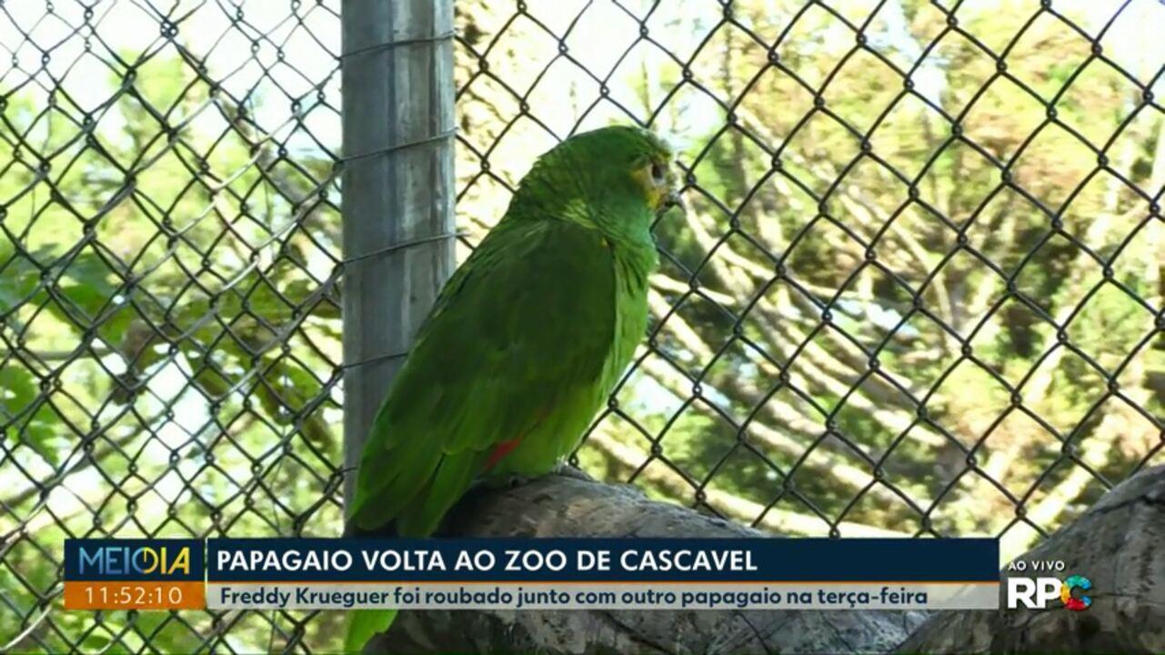 Papagaio roubado de zoológico de Cascavel volta pra casa
