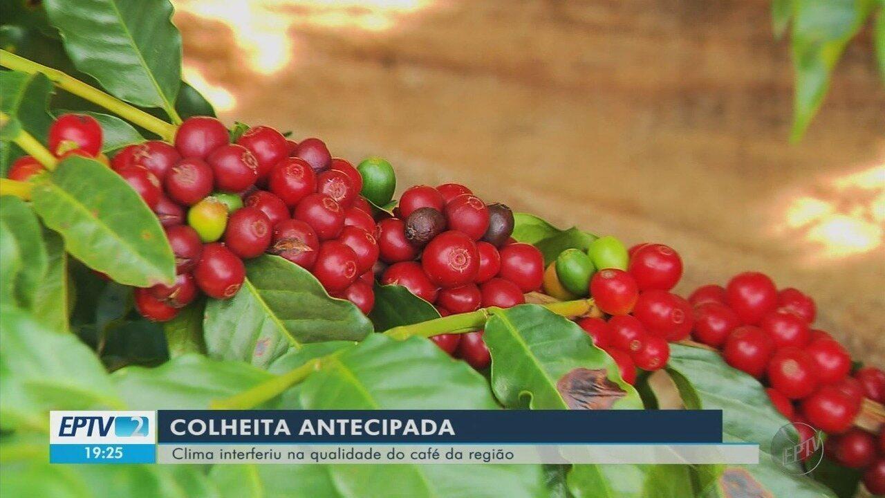 Produtores de café antecipam colheita, mas se preocupam com a qualidade no Sul de MG