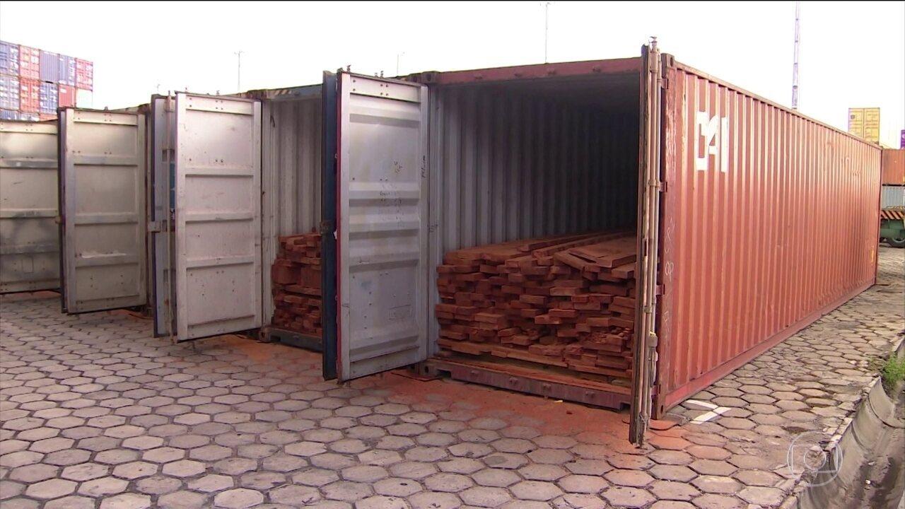 PF e MP faz operação contra a venda ilegal de madeira na floresta amazônica