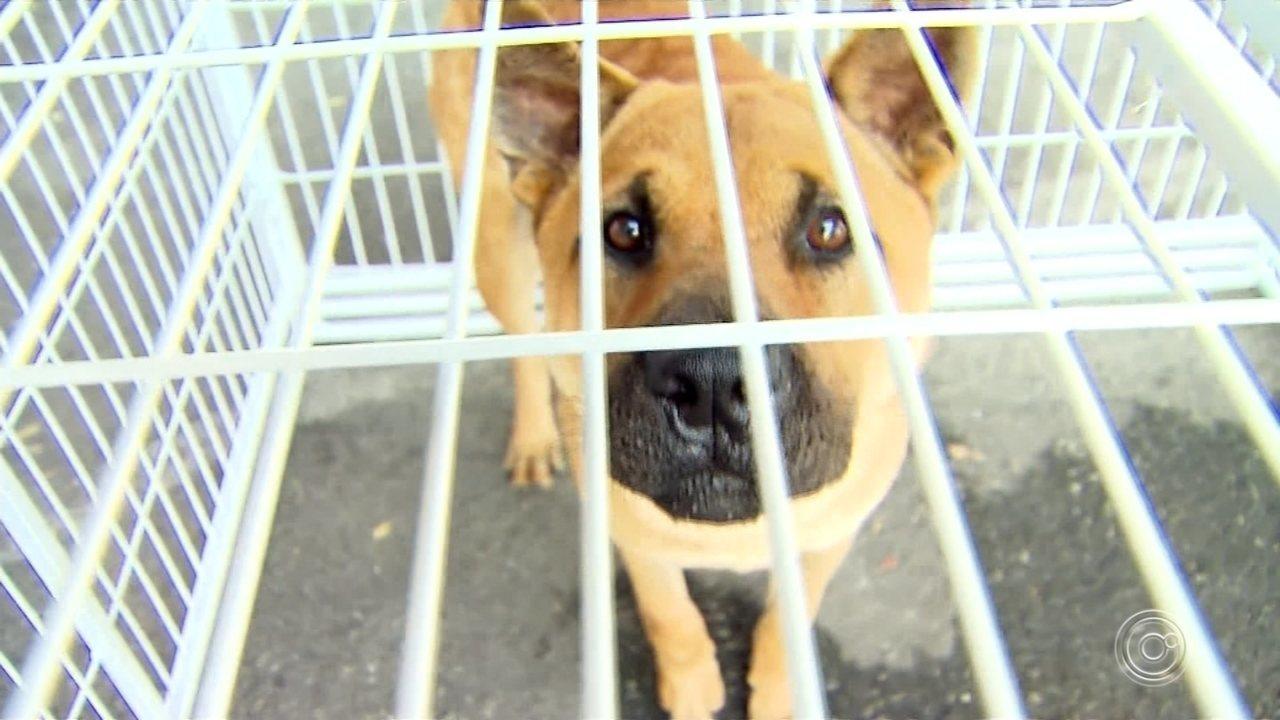Cães tirados de canil no maior resgate do Brasil são colocados para adoção