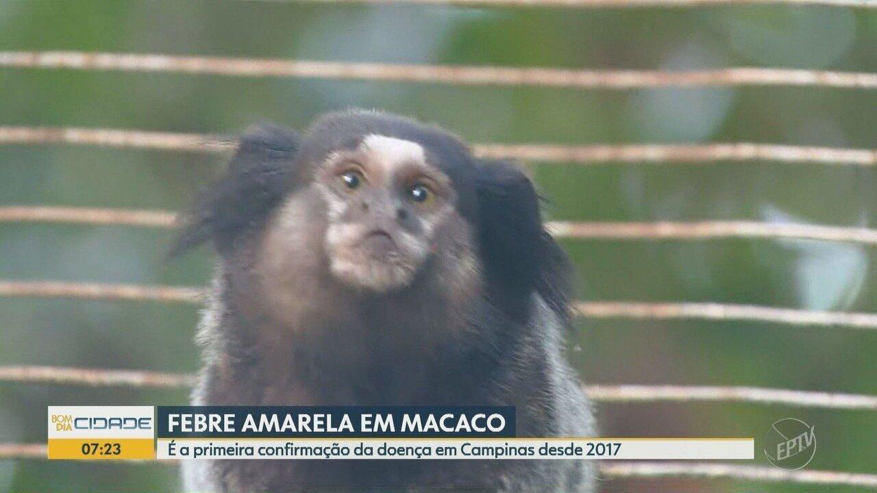 Campinas confirmou primeiro caso de febre amarela em macaco desde 2017