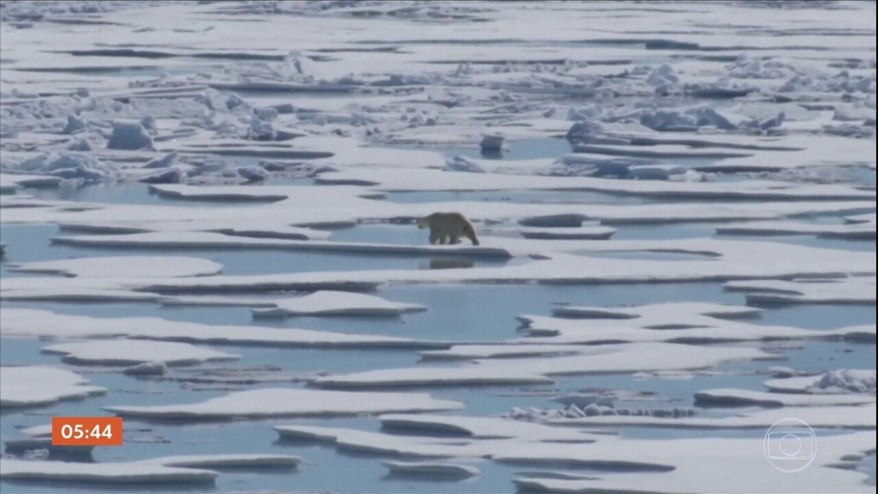 Ritmo de extinção das espécies de animais e plantas está muito acelerado, diz ONU