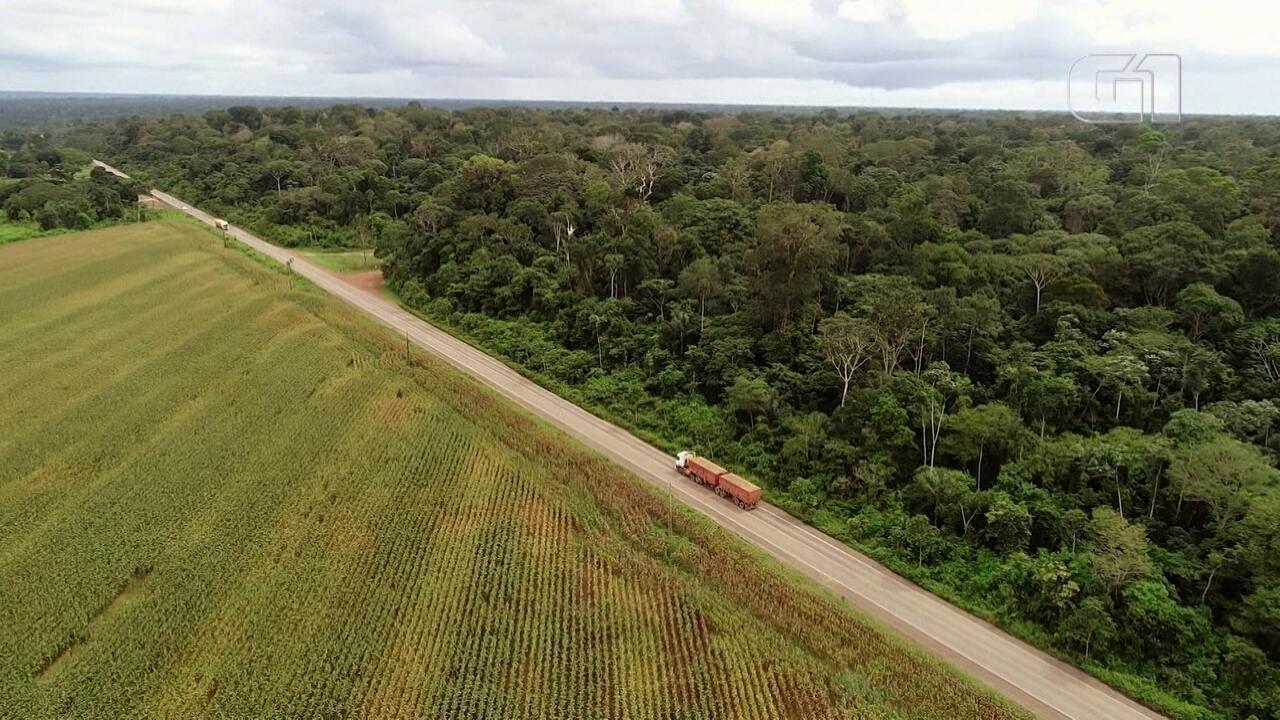 Desmatamento na Amazônia: mais da metade da floresta está em Unidade de Conservação