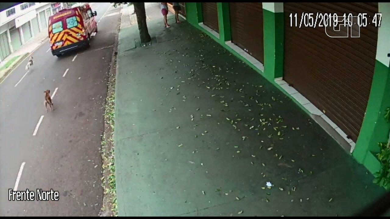 Resultado de imagem para Cachorros perseguem ambulância que levava dona para hospital, em Maringá