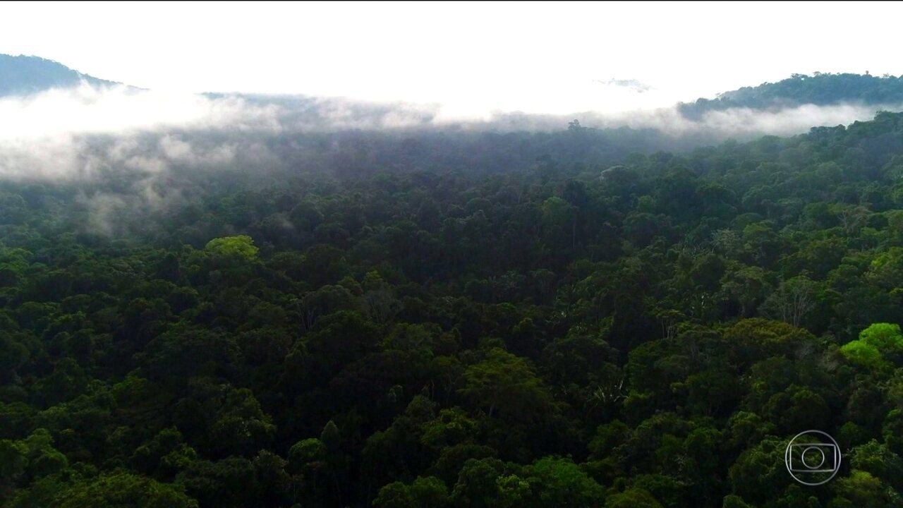 Pesquisadores fazem monitoramento da Amazônia para avaliar impactos do desmatamento