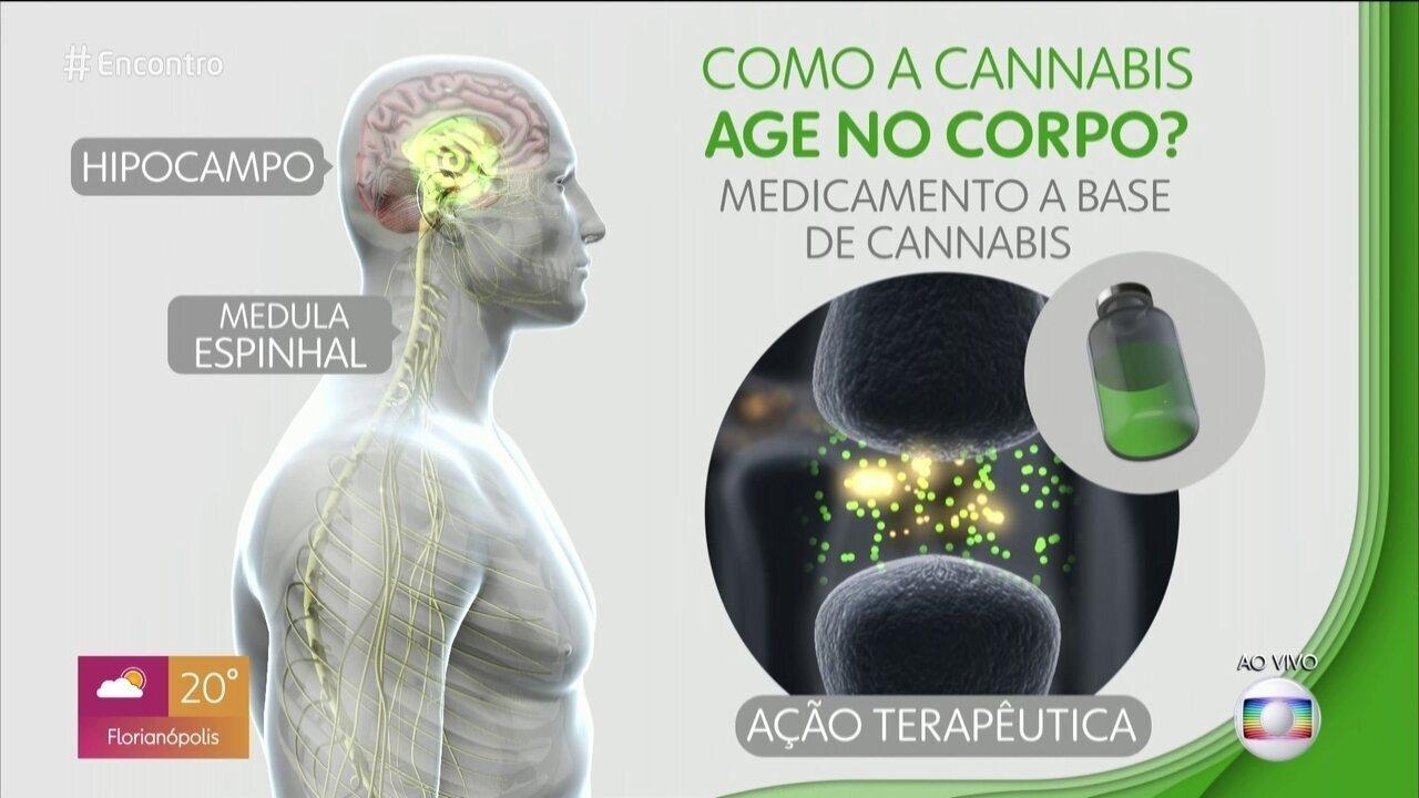 Resultado de imagem para Cannabis como remédio: quais os riscos e benefícios da planta?