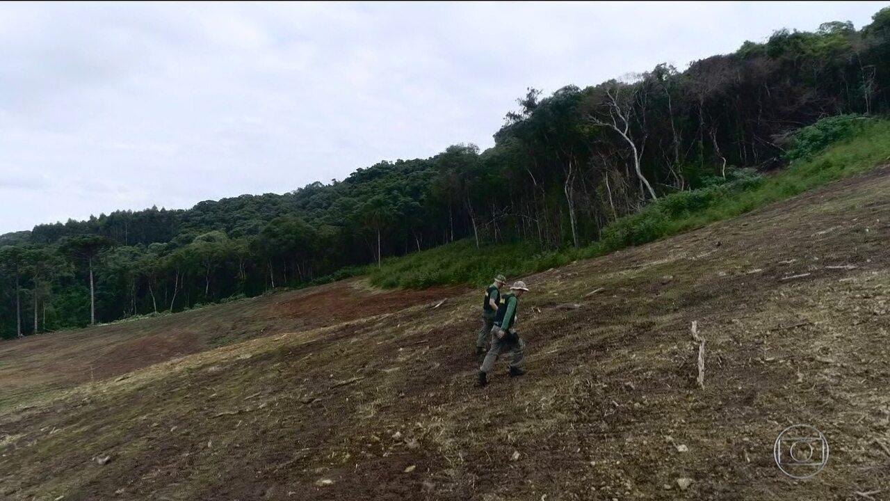 Maioria das ações de desmatamento no Brasil em 2019 foi ilegal, diz pesquisa inédita
