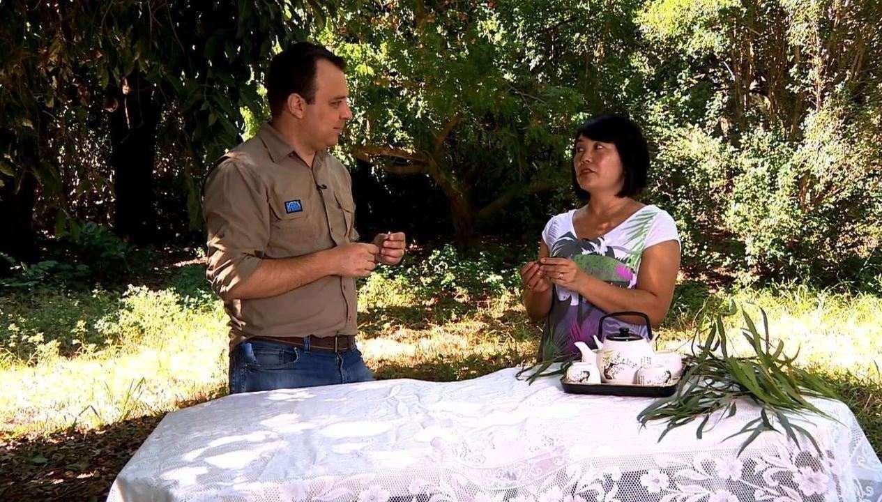 Folhas de eucalipto e flor de lavanda são ingredientes para chás