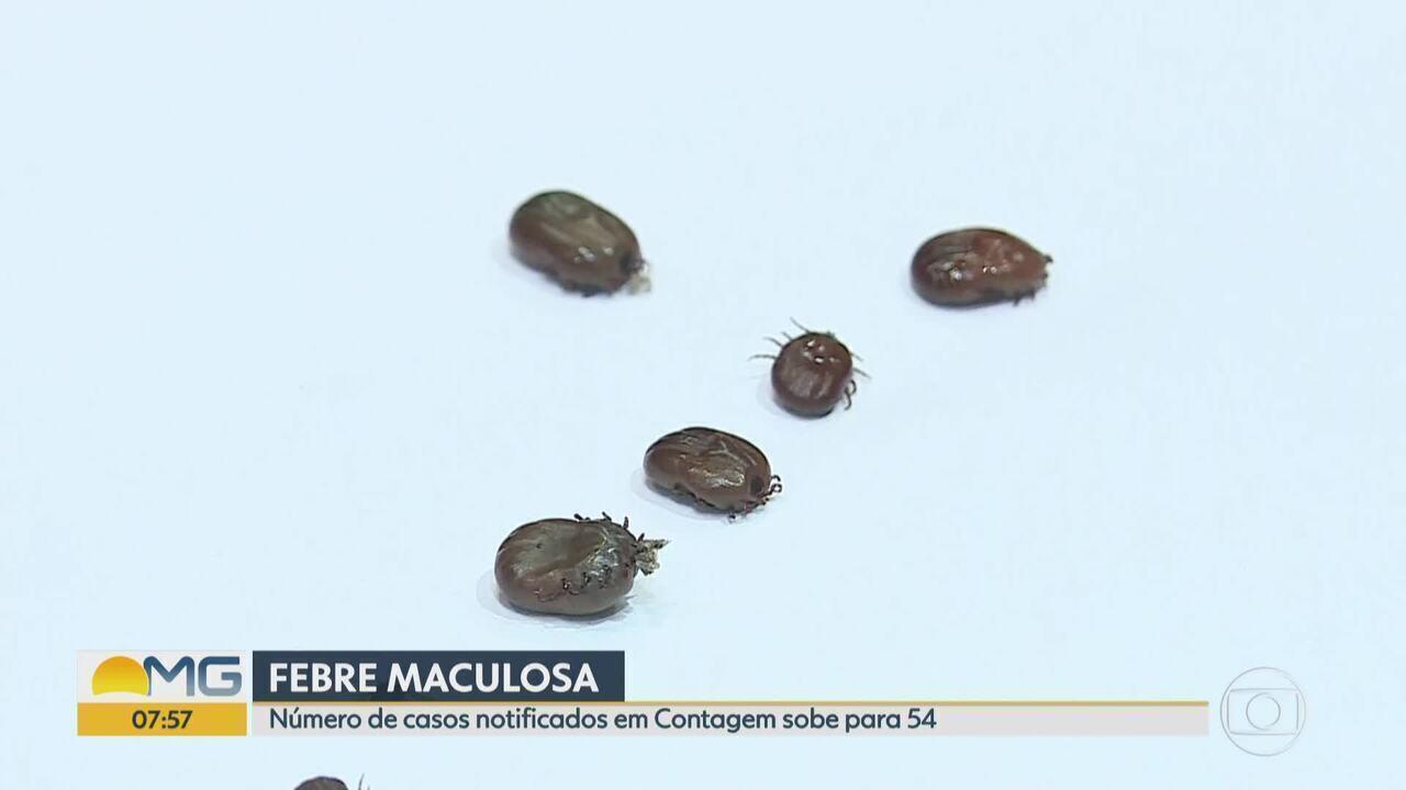 Contagem confirma sexto caso de febre maculosa na cidade; notificações chegam a 54