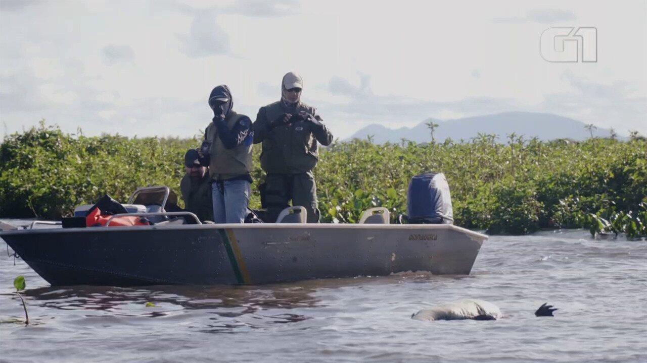 Pantanal tem um fiscal a cada 204 km² para combater a caça e a pesca ilegal