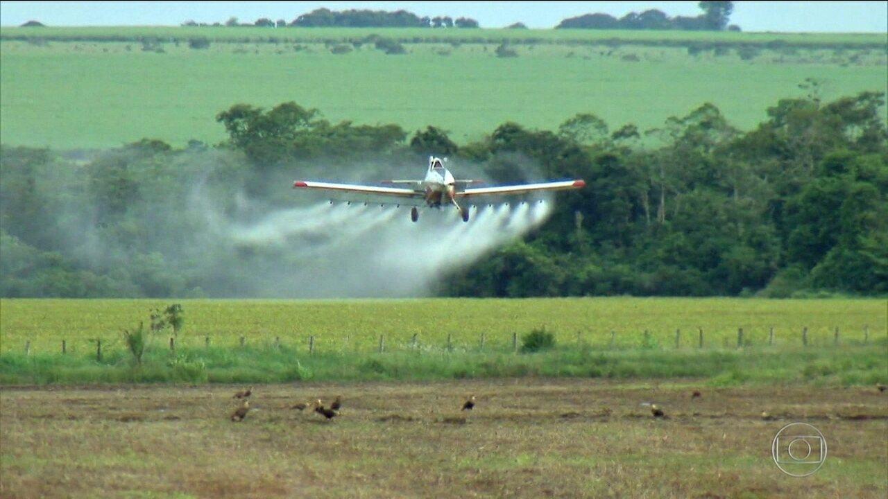 Governo acelera liberação do uso de novos agrotóxicos no país