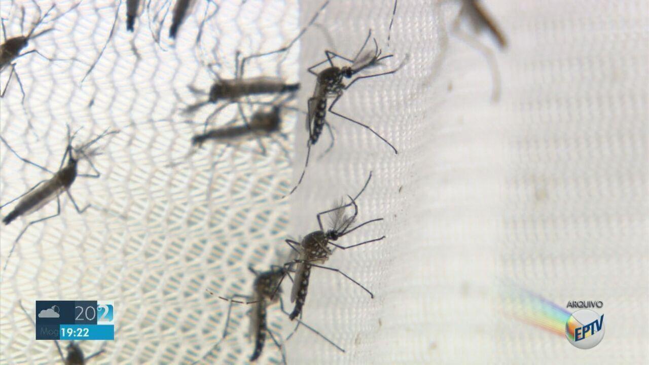 Campinas registra maior número de casos de dengue em junho desde 1998