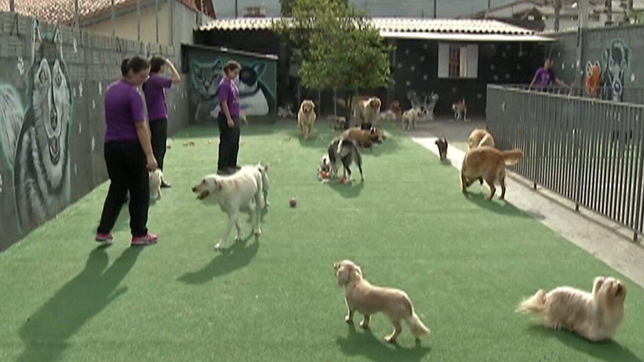 Procura por hotéis para cachorros cresce até 40% no período de férias escolares