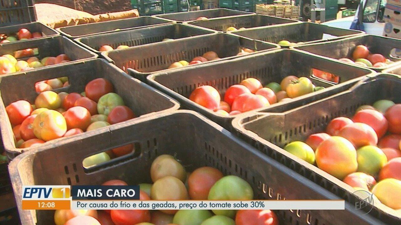 Por causa do frio e das geadas, preço do tomate sobe 30% em Ribeirão Preto, SP