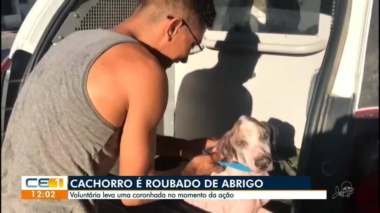 Cachorro é roubado de abrigo e voluntária diz que recebeu uma coronhada
