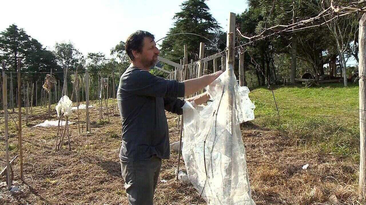 Produtores rurais ficam no prejuízos com aplicações de herbicidas