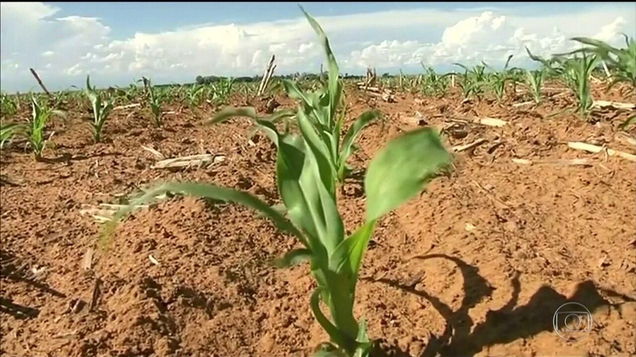 Produção global de alimentos está em risco, afirma relatório da ONU