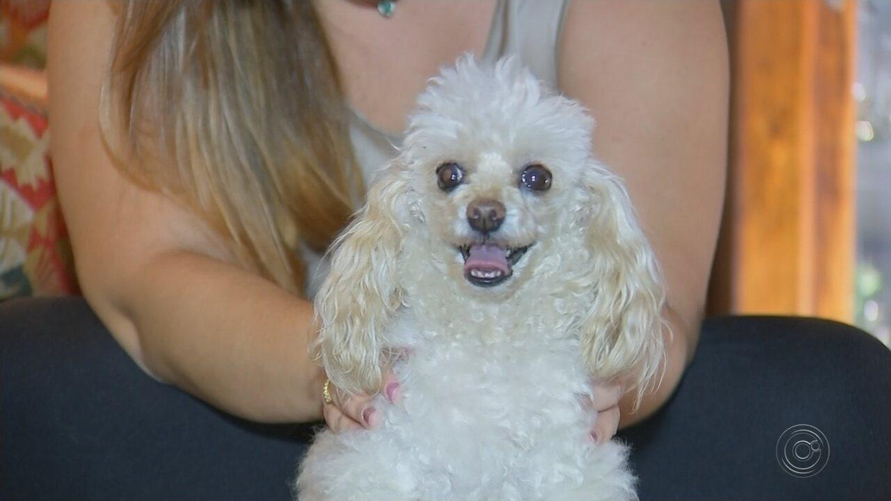 Aromaterapia pode ser usada como tratamento complementar em pets