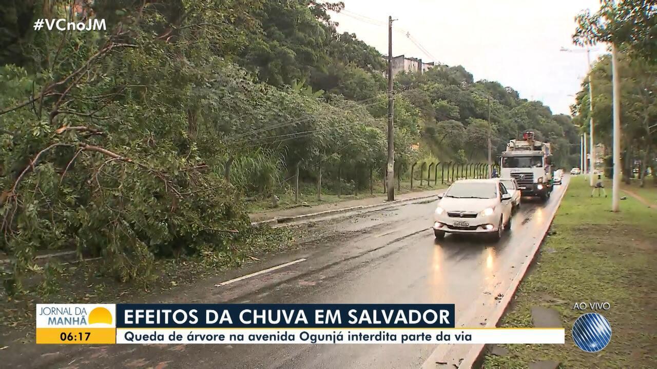 Chuva provoca queda de árvore na Avenida Ogunjá, que tem via parcialmente interditada