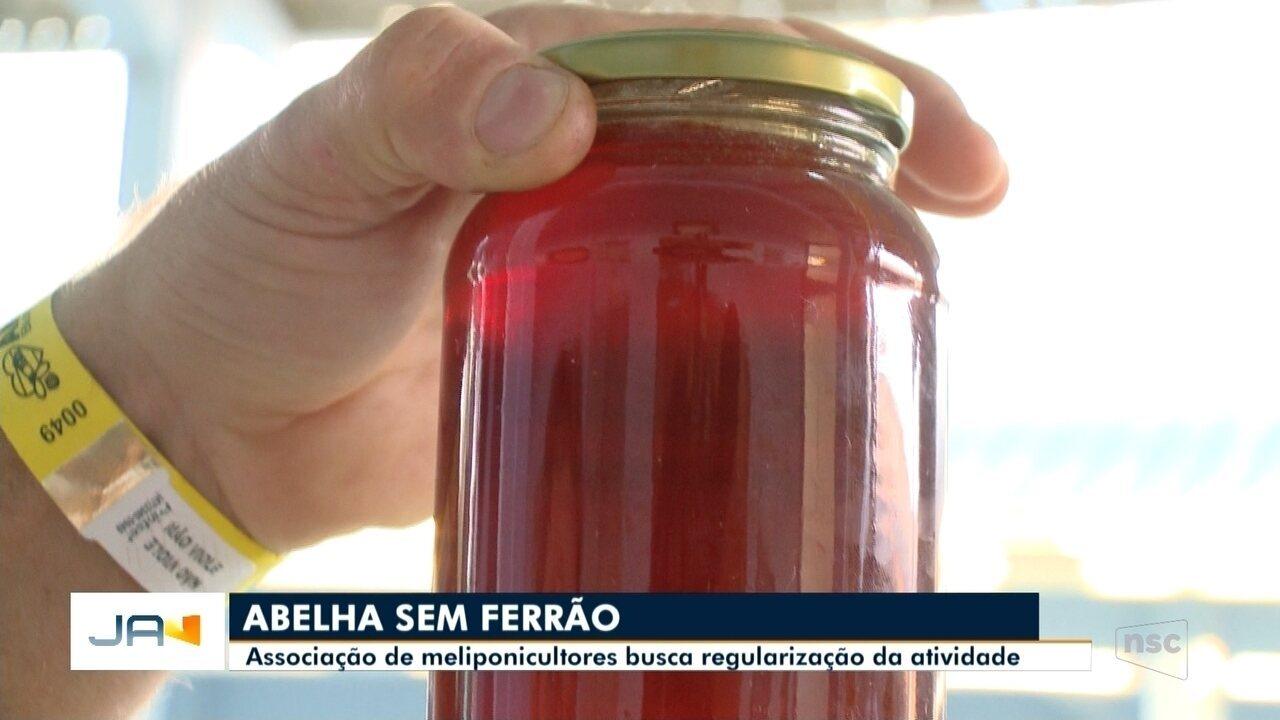 Associação de meliponicultores busca regularização do cultivo de abelhas em Blumenau