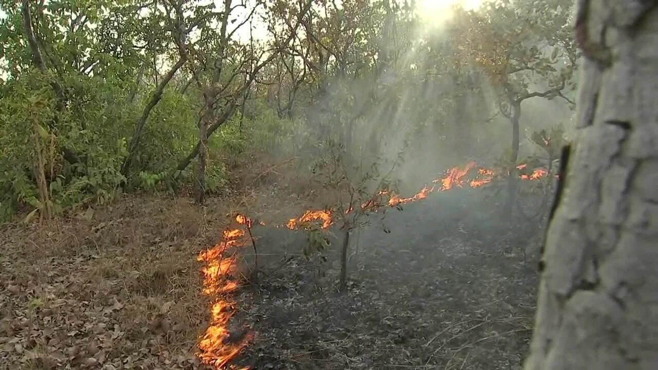 Polícia Federal vai investigar série de queimadas no Pará