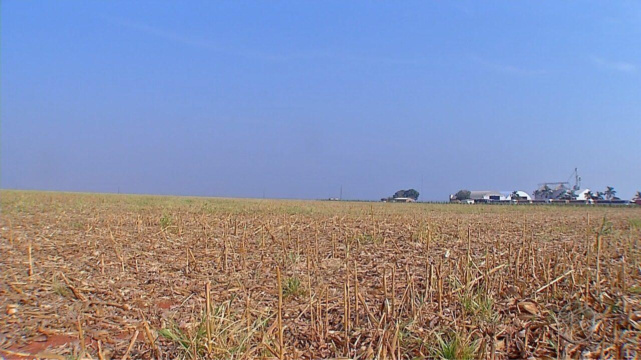 Produtores diminuem áreas de soja em MT