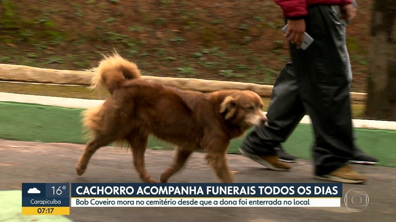 Cachorro passa a morar em cemitério após morte da dona