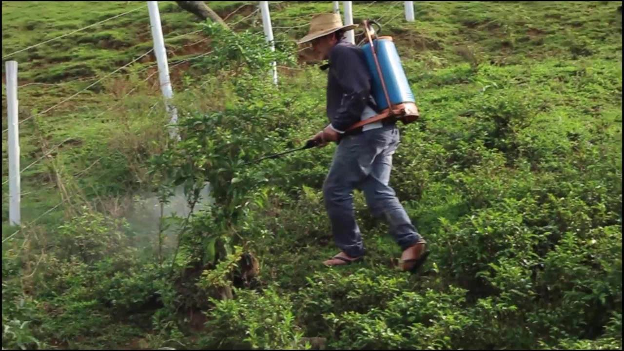 Plantadores de fumo sofrem com depressão e excesso de agrotóxico no trabalho, em SC