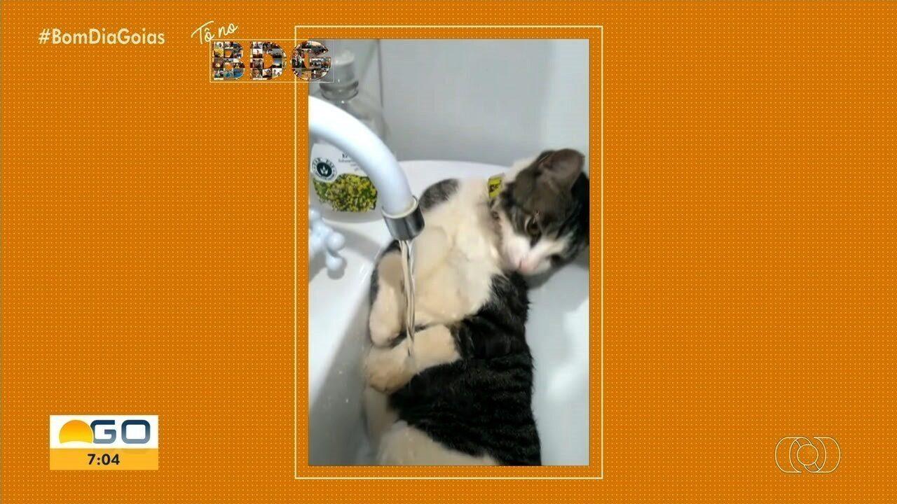 Vídeos mostram gato tomando banho em torneira e cachorro se refrescando em ventilador