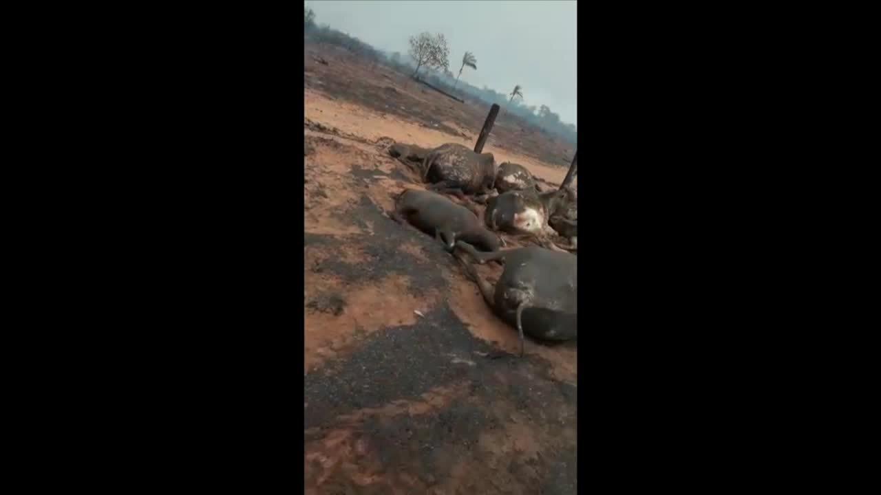 Incêndio mata mais de 50 animais em Canabrava do Norte (MT)