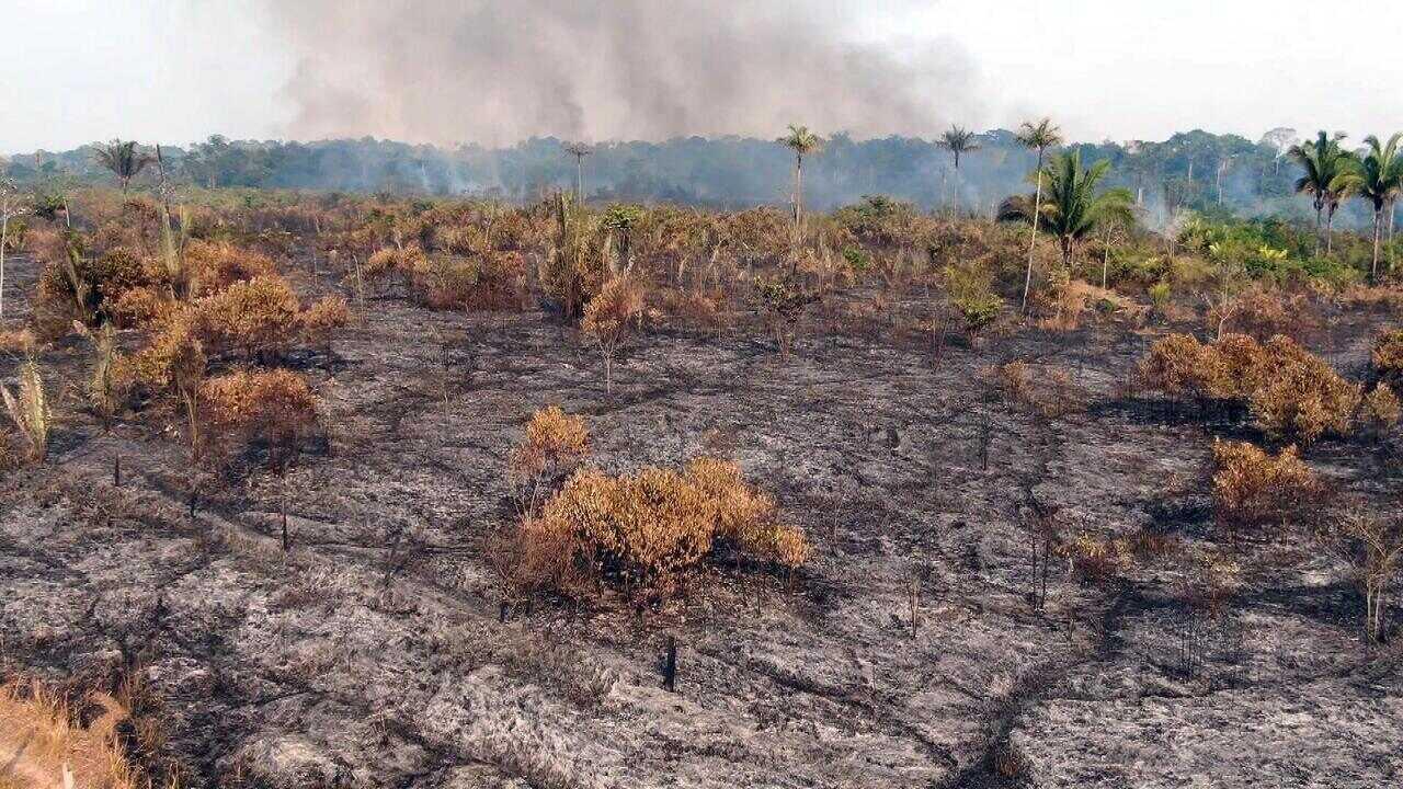 Profissão Repórter - Desmatamento – 18/09/2019 - 'Profissão Repórter' mostra os desafios de quem enfrenta o desmatamento