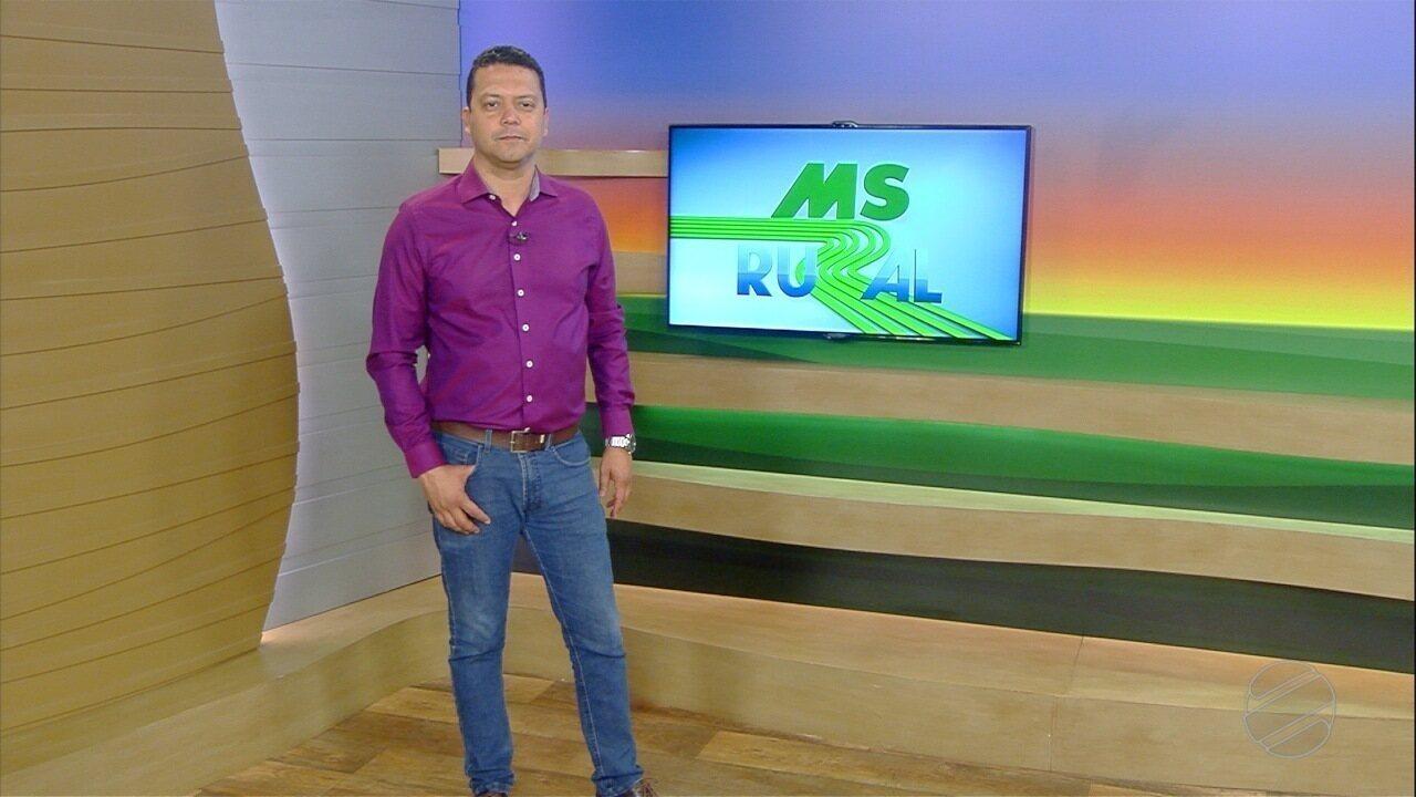 MS Rural - domingo - 06/10/19 - MS Rural - domingo - 06/10/19