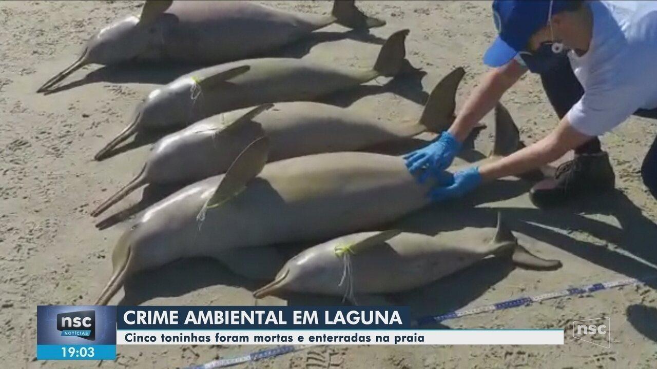Toninhas são encontradas mortas em praia de Laguna, no Sul de SC