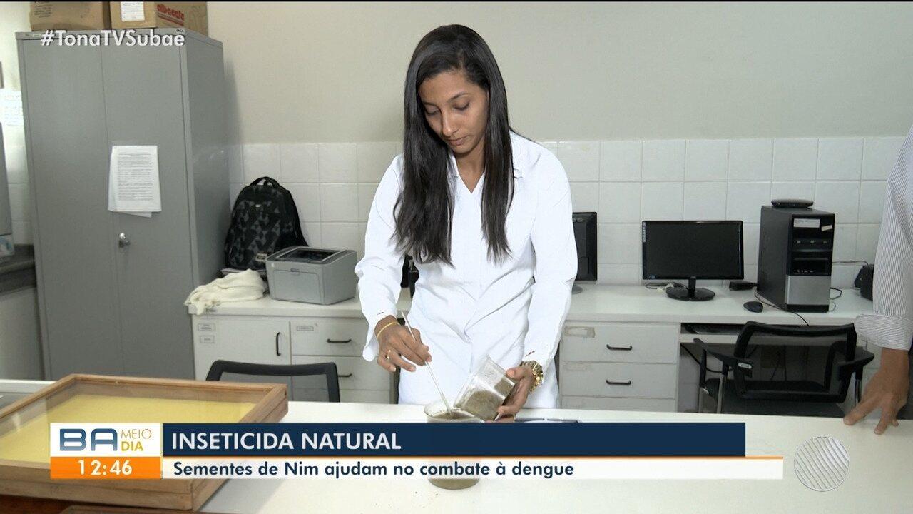 Pesquisadores da UEFS desenvolvem inseticida a partir de sementes de Nim