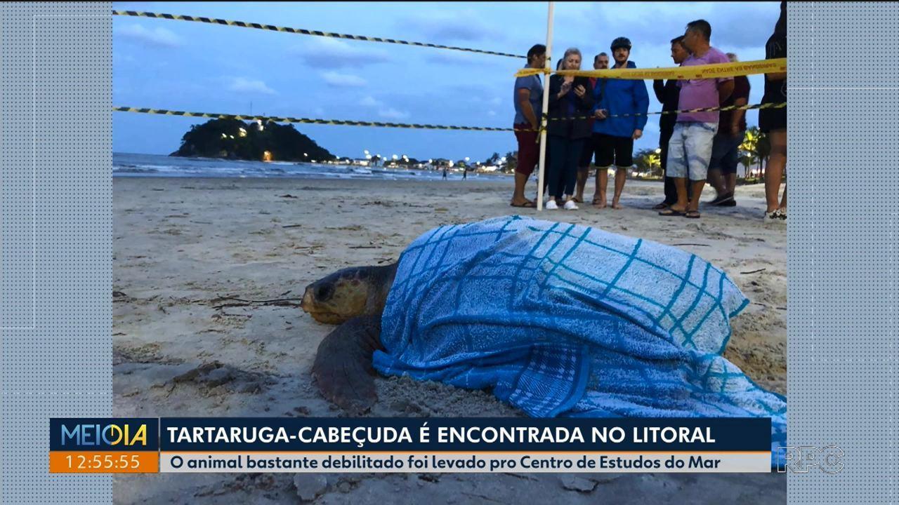 Tartaruga é encontrada em Guaratuba
