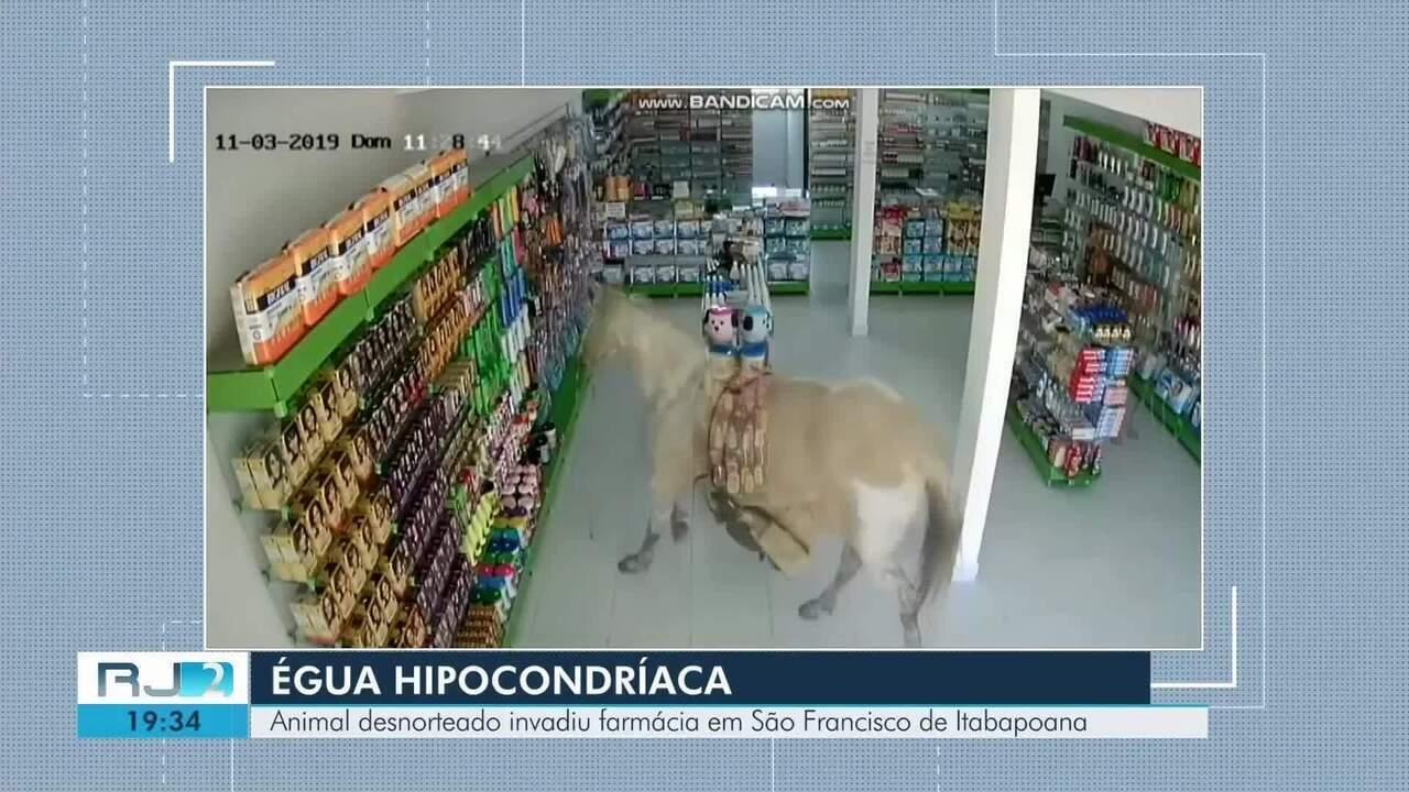 Animal assustado invade farmácia em São Francisco de Itabapoana