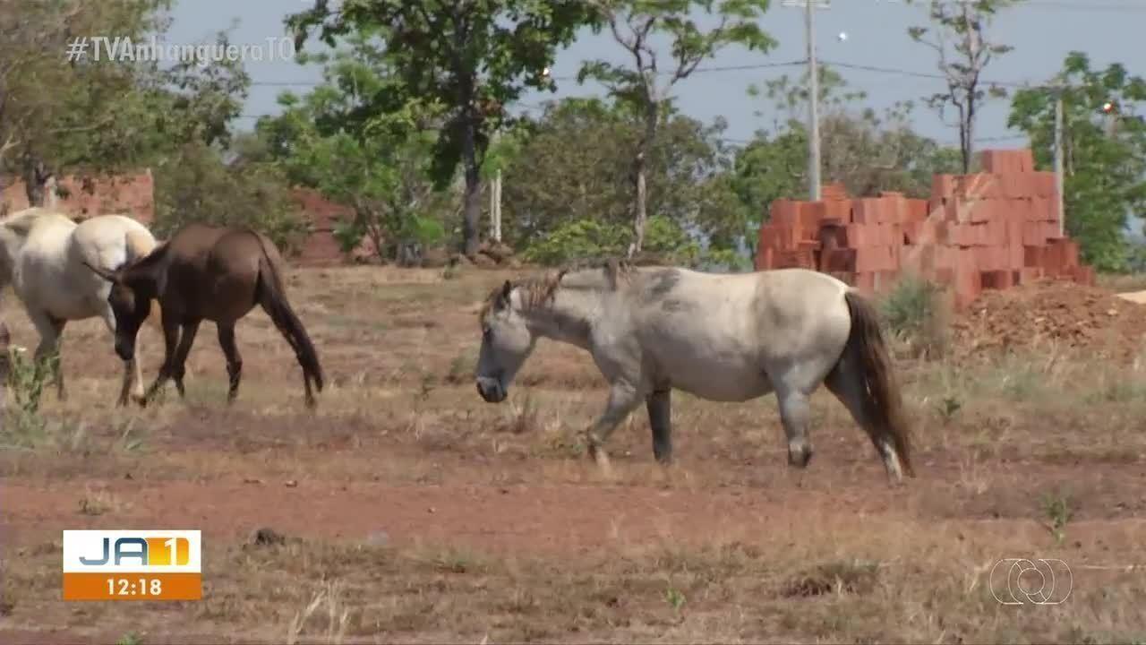 Animais soltos na rua causam prejuízos para moradores de Luzimangues