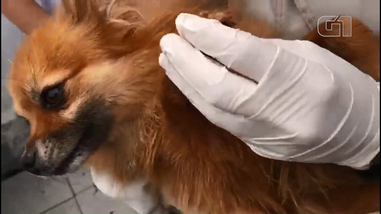 Veterinária é autuada suspeita de maus tratos a oito cães, em Curitiba
