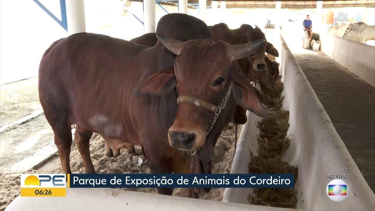 Exposição Nordestina de Animais espera movimentar R$ 30 milhões em negócios