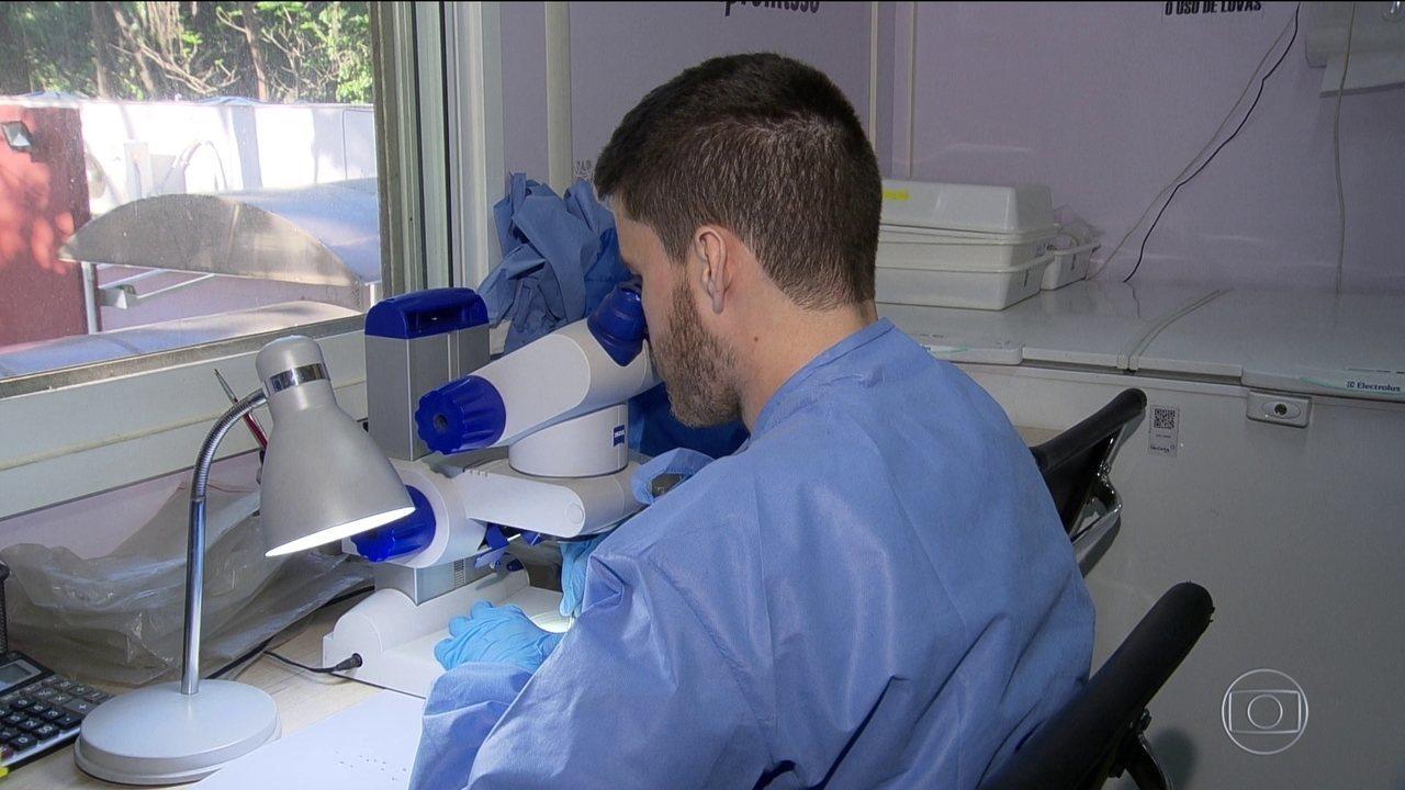Estudo mostra sucesso em método de combate à dengue, zika e chikungunya no Brasil