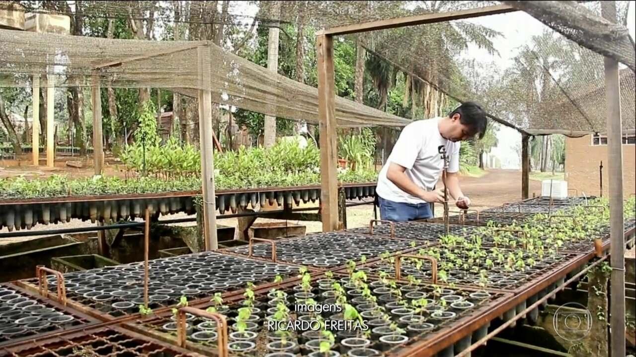 Prefeituras no interior de São Paulo criam projetos para plantio de árvores.