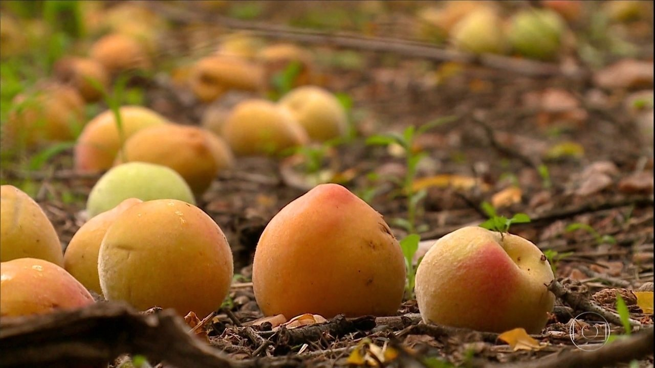 Quase metade da safra de pêssego pode se perder no Rio Grande do Sul