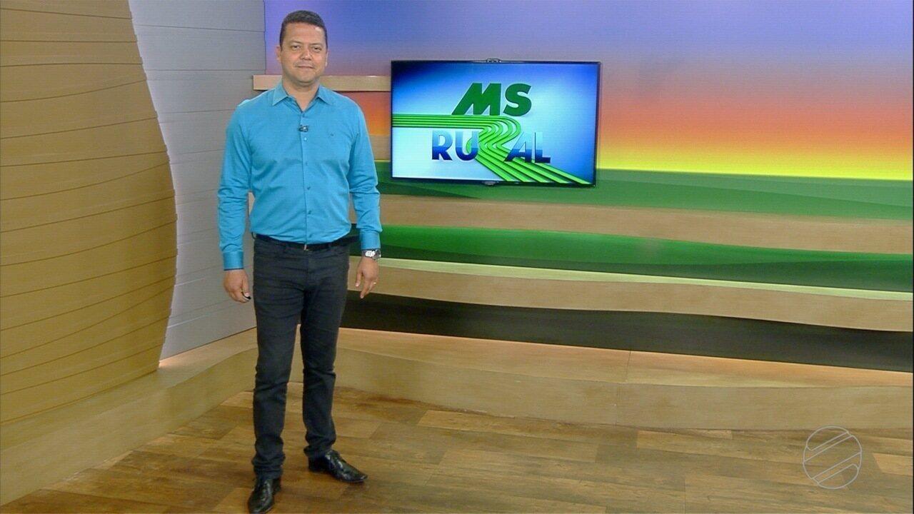 MS Rural - edição de domingo, 01/12/2019 - MS Rural - edição de domingo, 01/12/2019